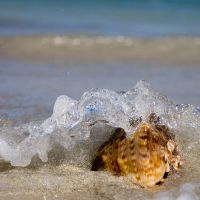 shell by poivre
