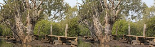 Tyres and tree (cross-eye 3D stereogram) by Rahball
