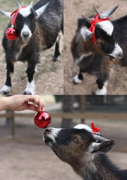 A Merry Little Goat by hope447