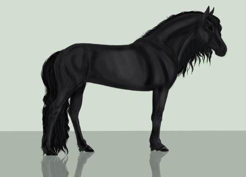 Friesian by toby21342