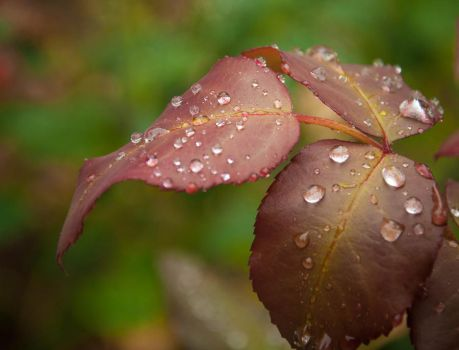 Nature's Cry by dianora