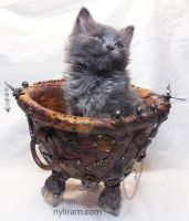 Kitten in Steampunk bowl by MarilynMorrison