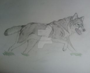 Skye Running by Wild-As-Wolves