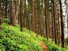 Hillside With Thick Trees by PaperStreet-stock
