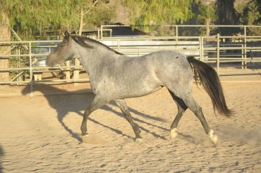 DWP FREE HORSE STOCK 315 by DancesWithPonies