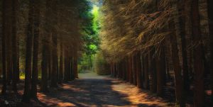 Forest Mood by ildiko-neer