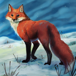 Snow Fox by Noctualis