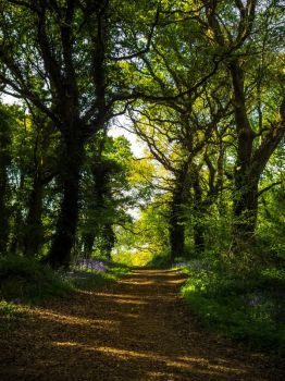 Walk The Bluebell Path by EmMelody