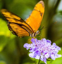 Butterfly01 by AccessAccess