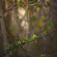 the light shines through by knowhopeinme