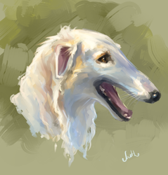 practice: Afghan Hound by Mothka