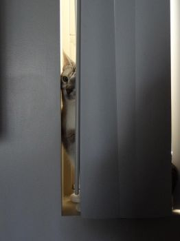 Hiding from the cable guy by JaxBnice