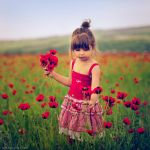 Poppies Story by Daizy-M