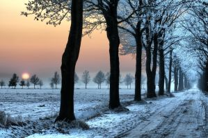 Winter road along the trees by Wil-028