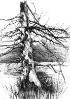 old tree by SoloMiaa