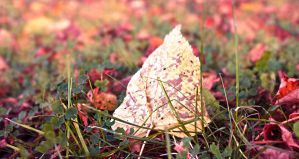 Leaf With A pop of colors by CamillaSakar