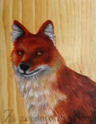 Dhole by ZoeSotet