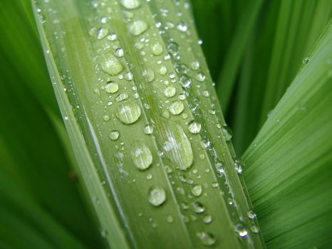 Water Drops on Leafy Greens by rerighthand