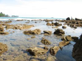 Crab infested reef by NaturalBornCamper