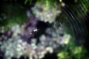 Life is like spiders, cobwebs by suicide-butterflies