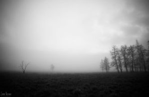Misty field by jsanna