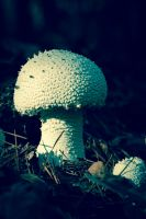 Mushrooms by CarlMillerPhotos