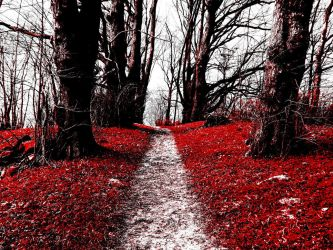 The Path of the Rose by Knochenhans