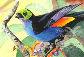 Paradise tanager by rieke-b