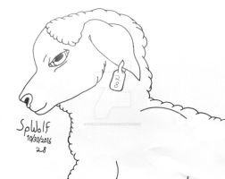 Realistic Dorper Sheep by SpellboundFox