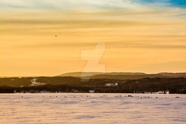 Bird on a frozen lake by CharleneBoostRoussy