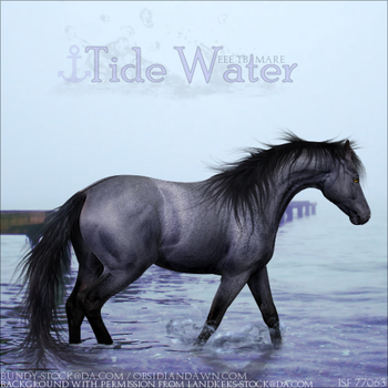 Tide Water by Amurath-Equine
