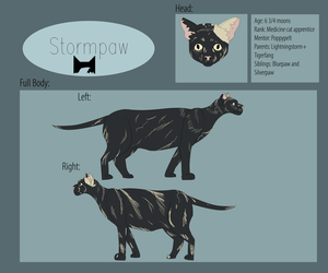 Stormpaw- Reference by Etherinea