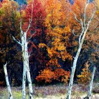 Shades of Autumn 13 by MadGardens