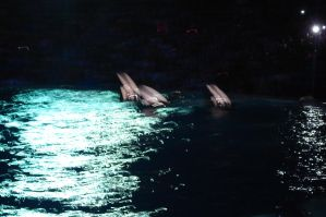 Killer Whale Show by DarkAileyba