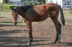 Conformation - Lanky Yearling I by LuDa-Stock