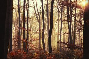 Moody forest by tadzio89
