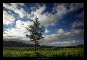 Lone Tree Evening by tfavretto