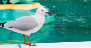 NZ- Seagull in Christchurch by EJSCreations