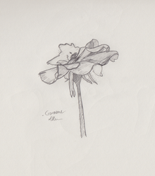 Flower w/ Some Shading by ItWasHisSled