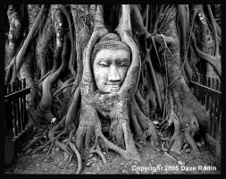 The Face of the Buddha, 2005 by DaveR99