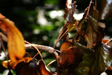 Forest Leaves Close Up by grumble-bum