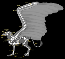 Gryphon/Griffin/Griffon Anatomy - Skeleton by horse14t
