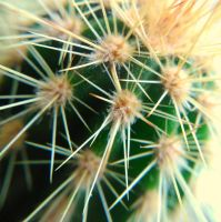 prickly by Mittelfranke
