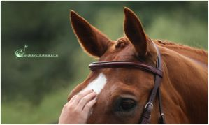 Once Upon A Moment by Equus-Photography