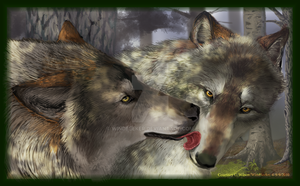 Wolf Mates by WindSeeker
