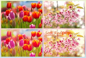 Soft Red POP by EliseEnchanted