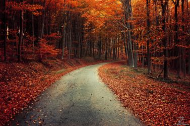Autumn Journey XXII. by realityDream