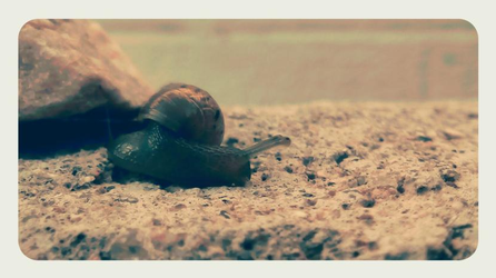 Fredrick the Snail by TropicaIDeer