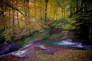 Autumnal stream (III). by Phototubby