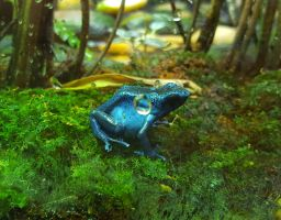 Blue Frog by Lonefoxxy